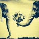 Koca İlgisizliğinden Muzdarip Hanımefendiye…