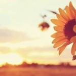 Eşim Dil Öğrenmek İçin Karma Eğitime Razı Ama Ben Değilim