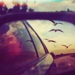 birds-car-photography-summer-Favim.com-1080255